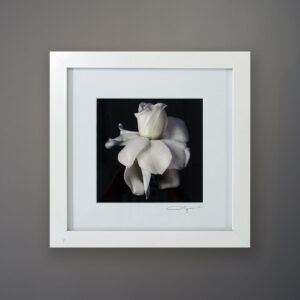 debi-shapiro-photography-gardenia-1