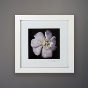 debi-shapiro-photography-gardenia-4