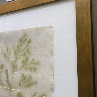 emily-hixon-original-1970s-drawing-botanical