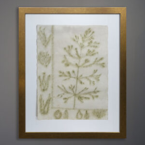 emily-hixon-original-1970s-drawing-botanical